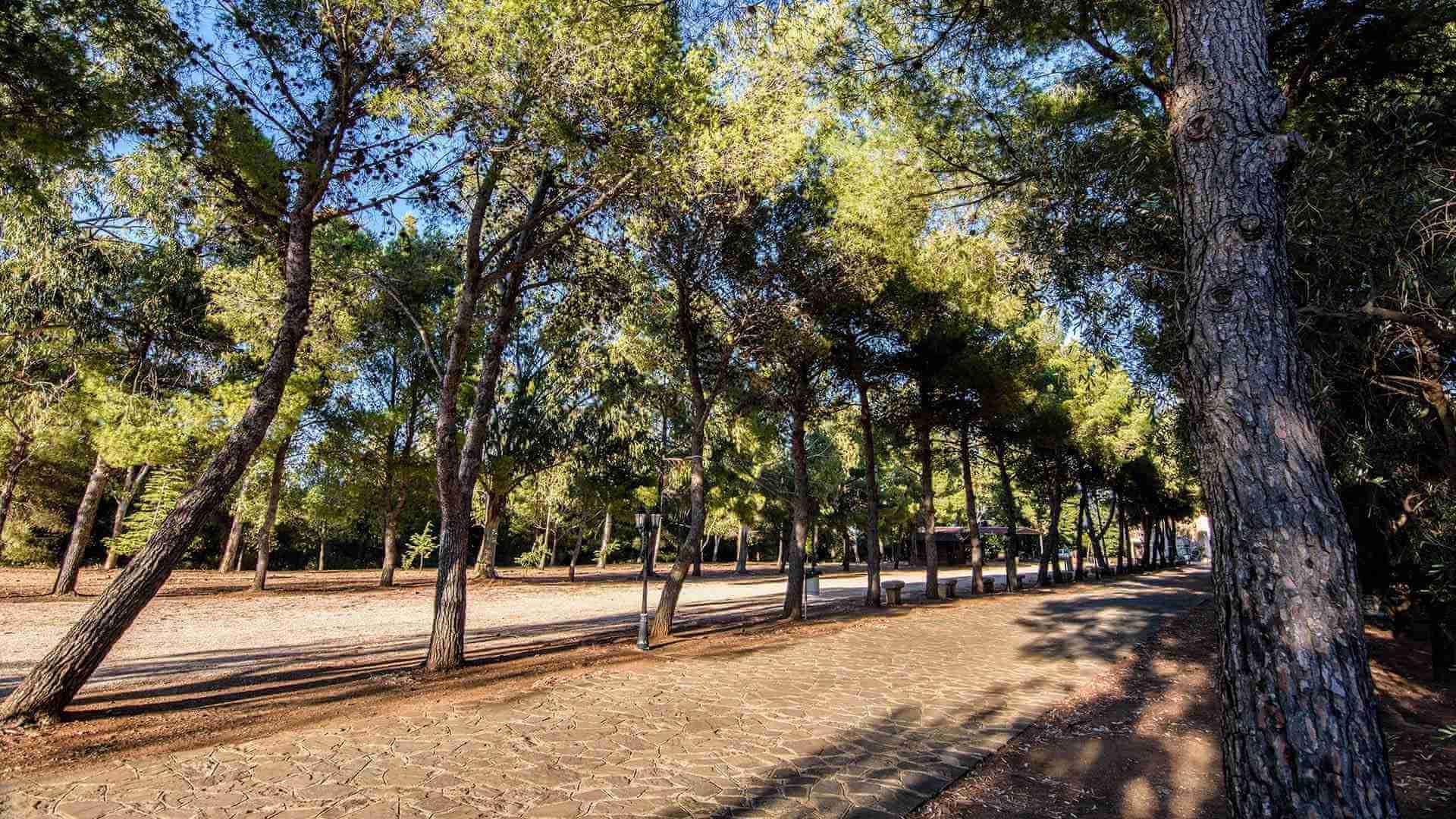 Rocca Imperiale - Santuario Madonna della nova, alberi