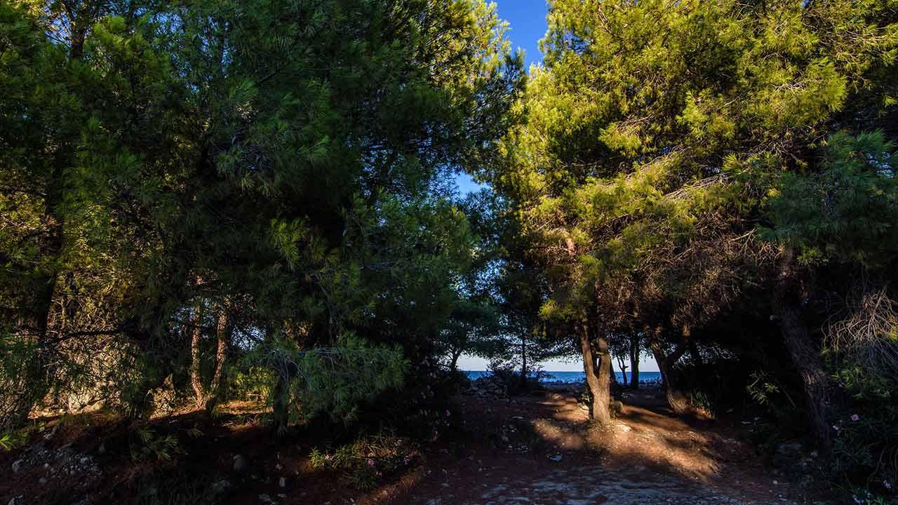 Spiagge di Rocca Imperiale - Pineta